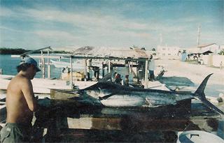 Maret 2013 world for Deep sea fishing belize